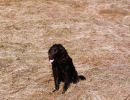 jagdliches-training-26-02-2011-vlg-bernecker-001