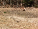 jagdliches-training-26-02-2011-vlg-bernecker-009