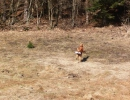 jagdliches-training-26-02-2011-vlg-bernecker-010