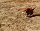 jagdliches-training-26-02-2011-vlg-bernecker-011