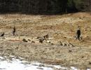 jagdliches-training-26-02-2011-vlg-bernecker-015