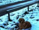 weihnachtswanderung-18-12-2011-054