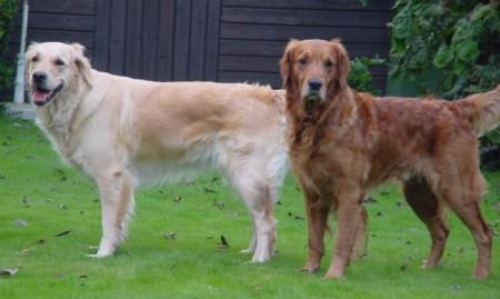 Annie & Baron